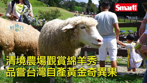 清境農場觀賞綿羊秀,品嘗台灣自產黃金奇異果