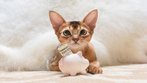 無論跟家人還是孩子都要談到錢!利用寵物議題,培養孩子金錢觀與責任感…