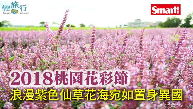 2018桃園花彩節,浪漫紫色仙草花海宛如置身異國