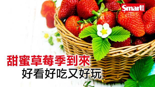 甜蜜草莓季到來,好看好吃又好玩